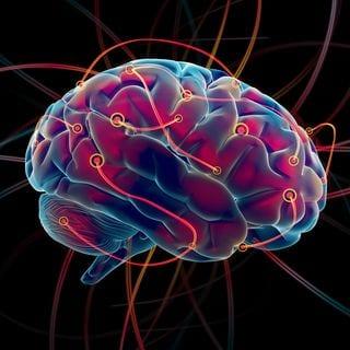 XStudio3D_brain